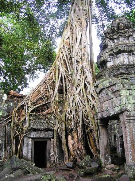 ©-iris-Cambodja-2006-